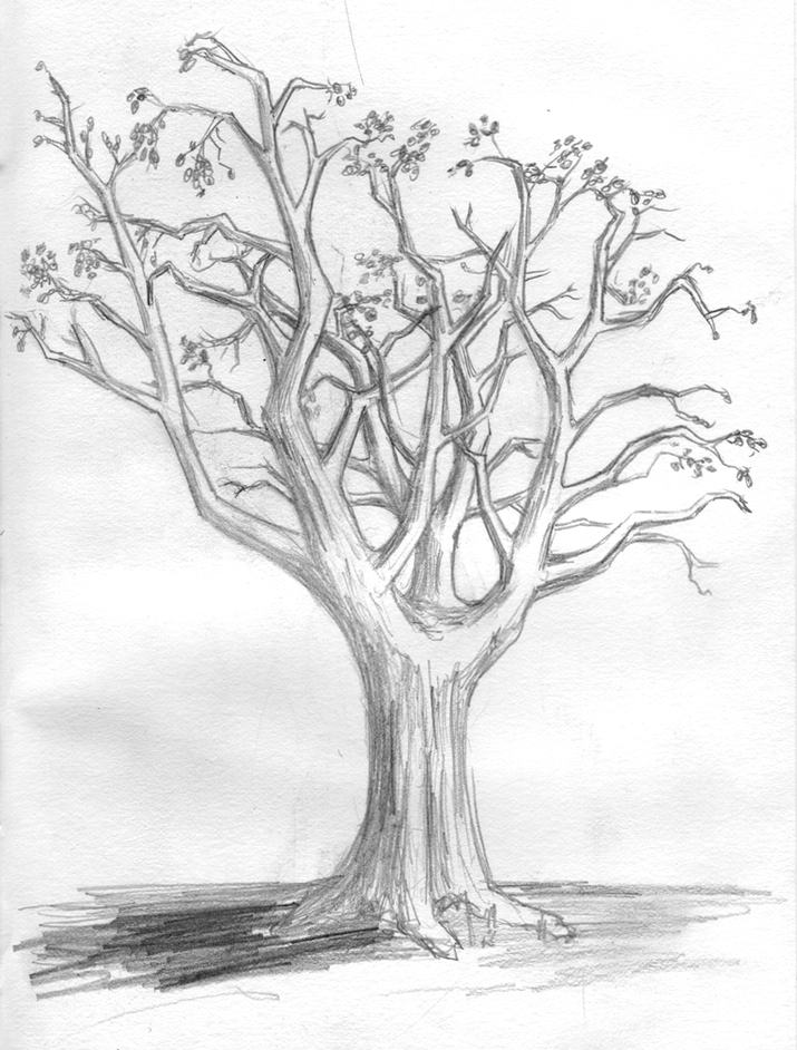 Drawing 003 – Bare Tree