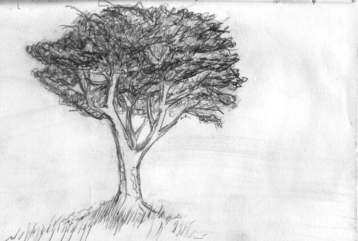 drawing 021 a rough tree drawing021leavespractice