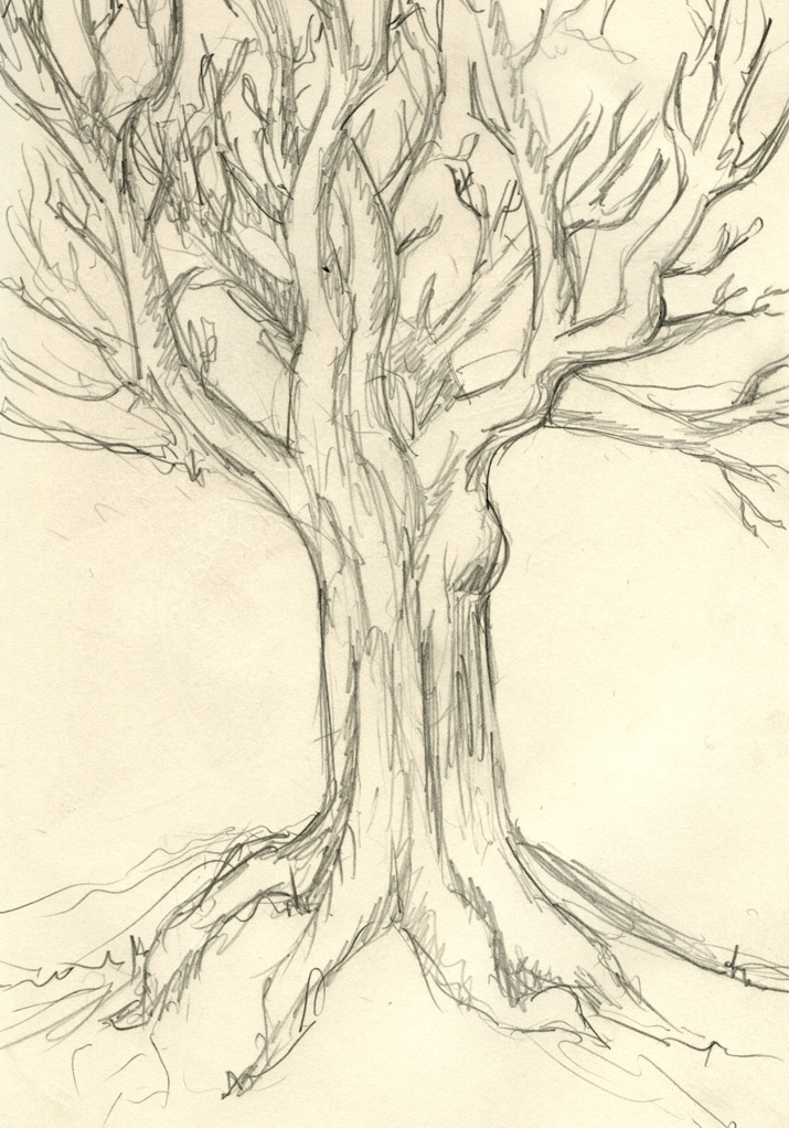 drawing 125 no time rough tree drawing125notimeroughtree